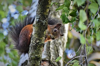 Brown and black squirrel on tree branch during daytime