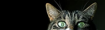 Brown tabby cat with black background