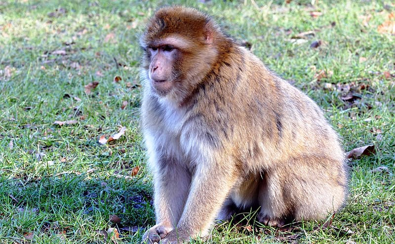 Brown monkey sitting on green grass during daytime