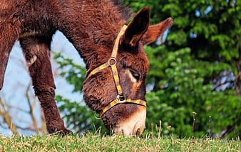 Donkey eating grass under clear sky