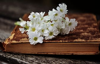 Yellow petaled flowers on brown bounded book