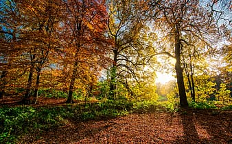 Panoramic photography of trees with sunlight pass through