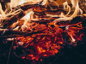 Shallow focus photography of burning firewood