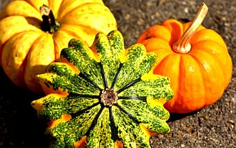 Orange pumpkins on ground