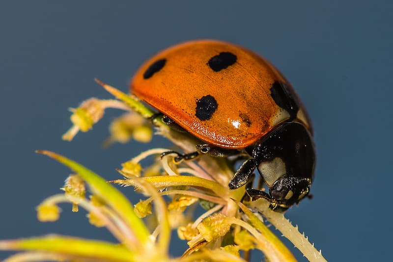 Brown and black ladybug on yellow flower close-up photography