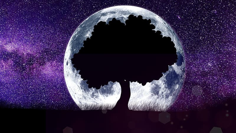 Silhouette of tree behind moon illustration