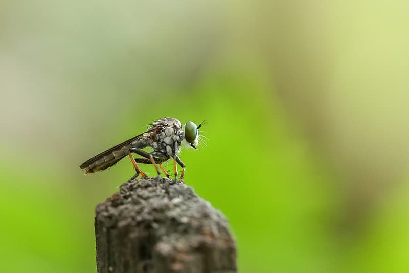 Selective focus photo of gray insect