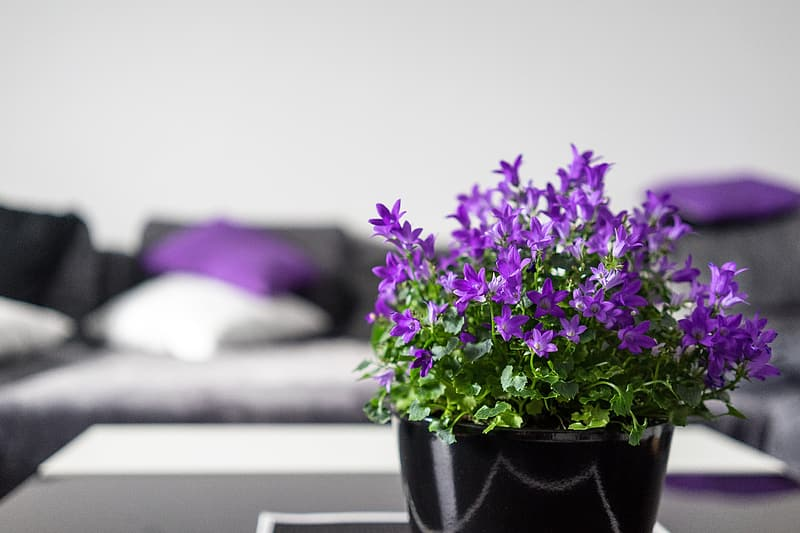 Green leaved plant with purple flower on black pot