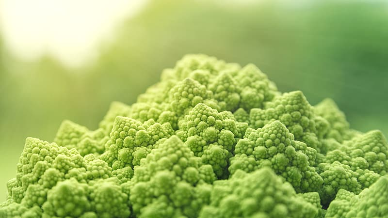 Green vegetable close up photo