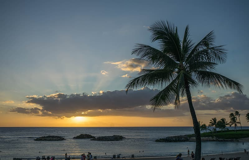 Silhouette of coconut palm tree during sunset