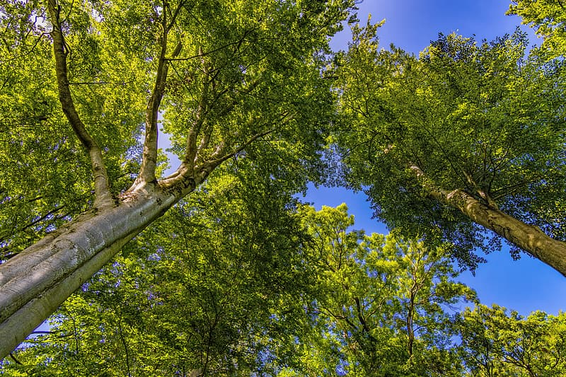 Low-angle photography of green leafed trees