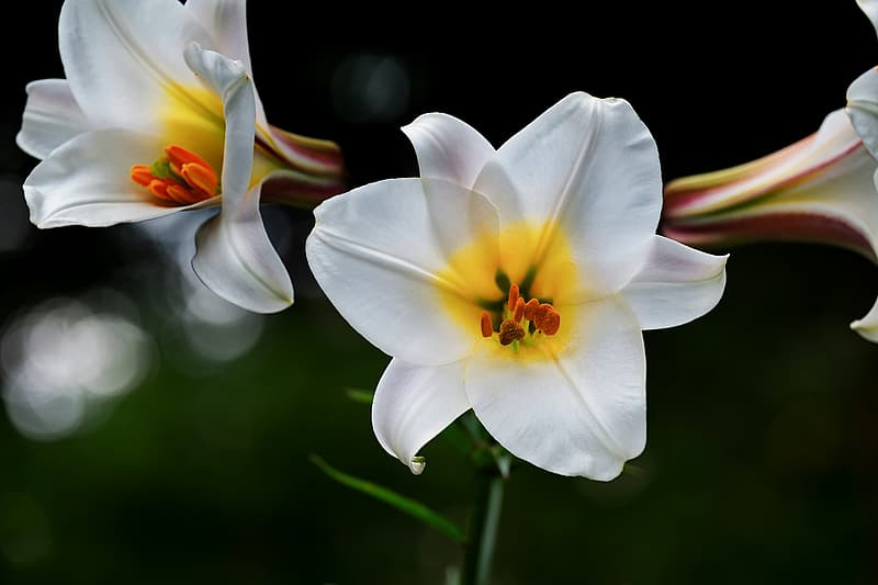 Selective focus photography of two white-and-yellow petaled flowers