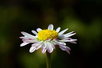 White flower with yellow pollen