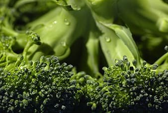 Close up photo of broccoli