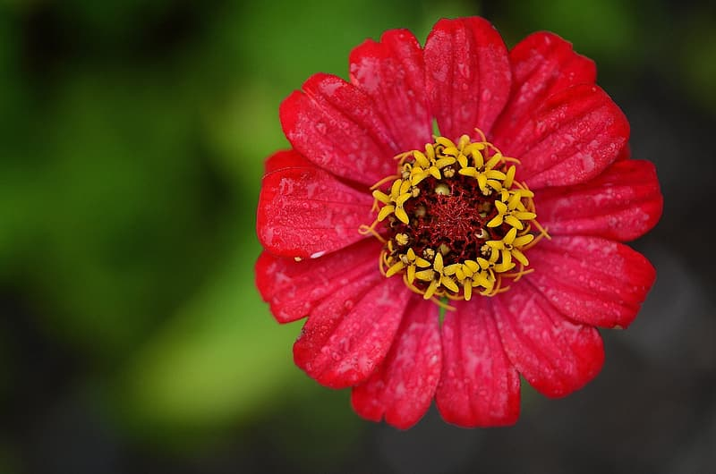 Closeup photography of red petaled flower