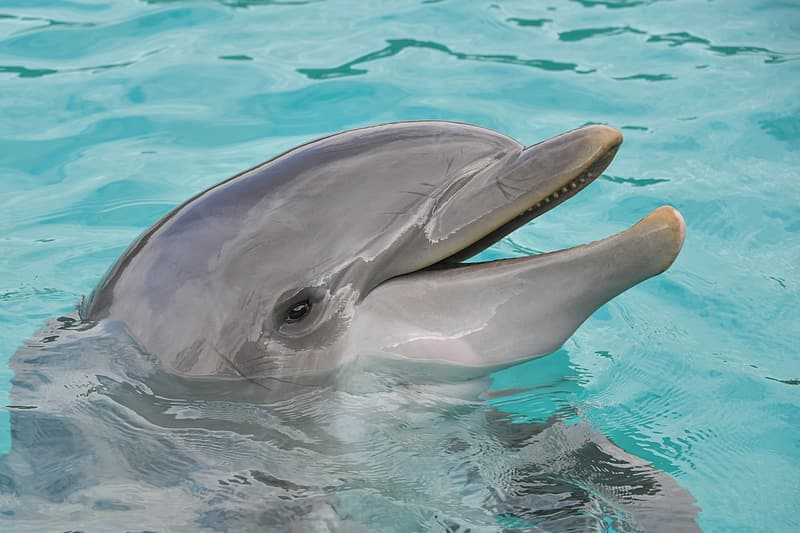 Close-up photography of gray dolphin on water