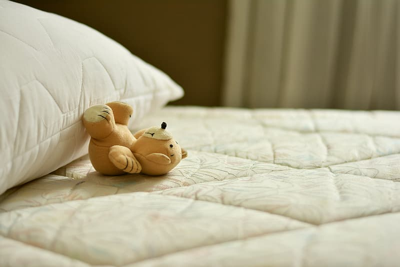 Brown and white teddy bear