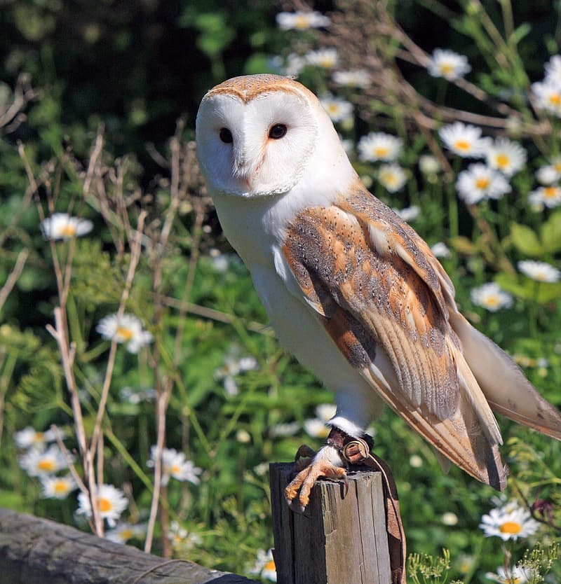 Photo of brown and white owl perched on wood