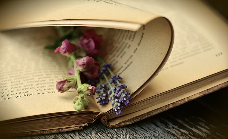 Pink and purple petaled flower on book page