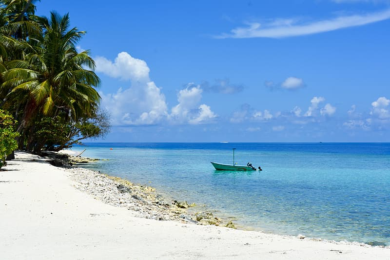 Boat docked on the beach near coast with trees during daytime