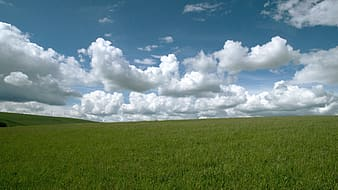 Green grassland under white and blue cloudy sky during daytime