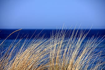 Macro photography of brown grass during daytime