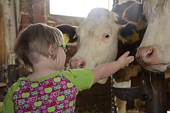 Girl in pink and white polka dot shirt standing beside white cow during daytime