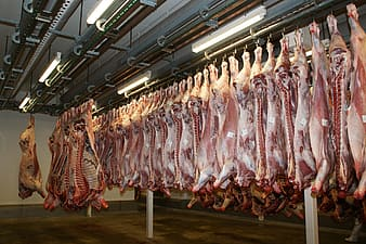 Raw meat hanged on hook