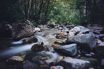 Stream with stones in middle of forest
