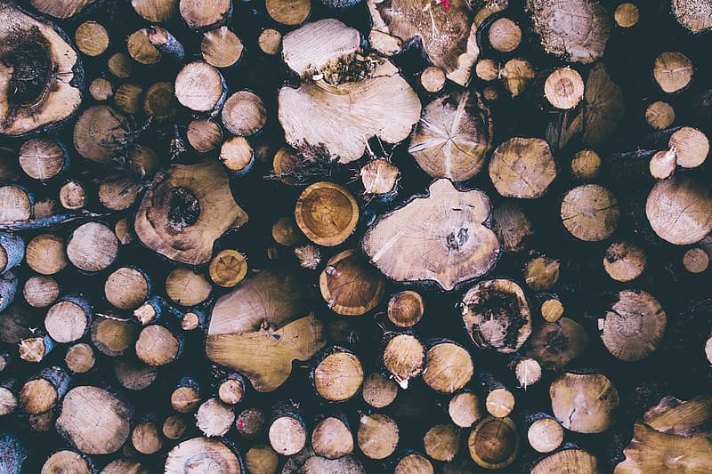 Cut logs from trees from forest