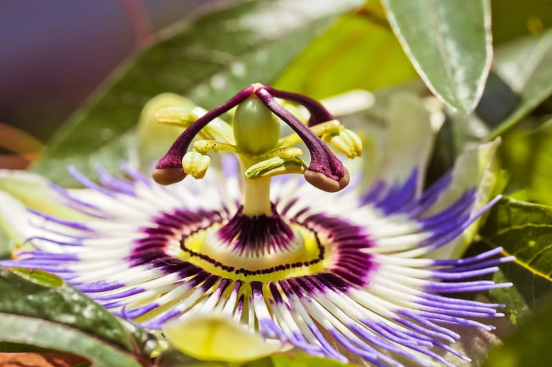 Selective focus photography of white and purple petaled flower