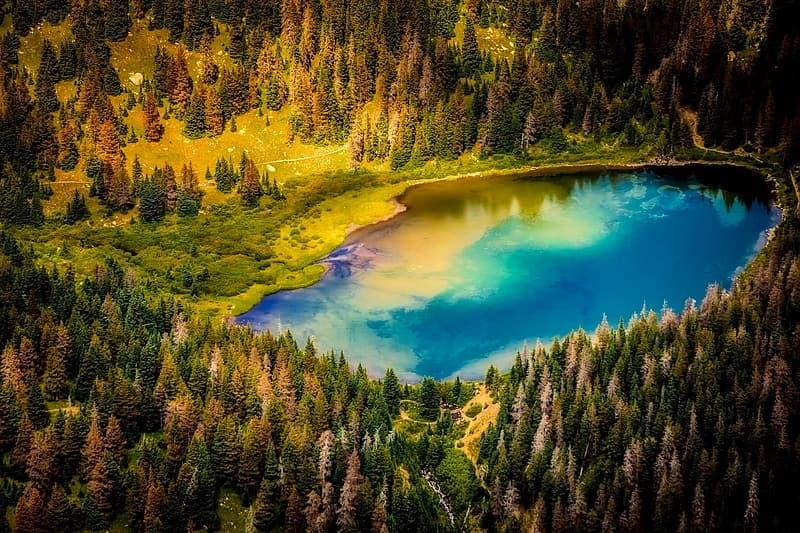 Aerial photography of body of water surround by trees