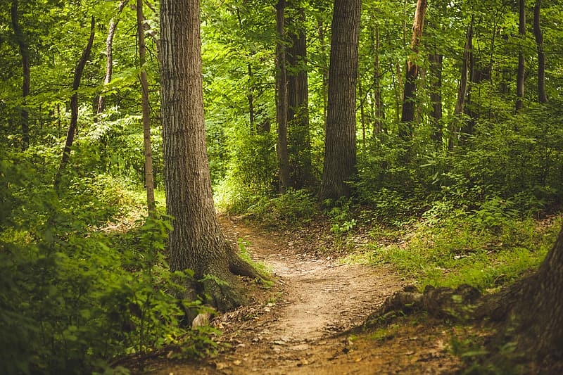 Landscape photography of dirty pathway surrounded by trees and plants \