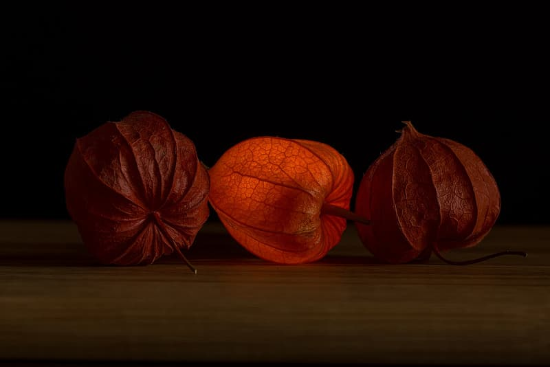Three brown leaves on brown wooden table