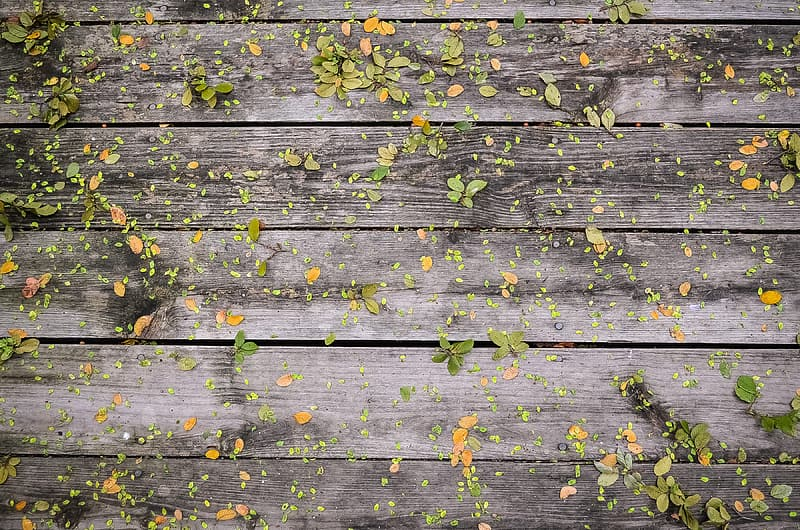 Leaves on gray wooden panel