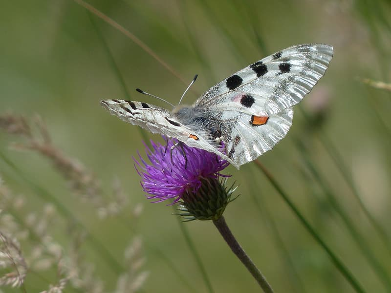 Butterfly perch on flower