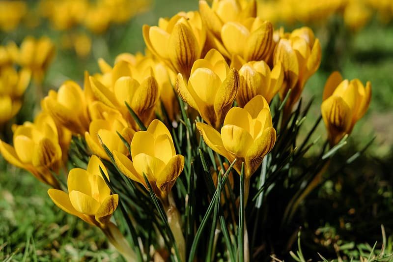 Shallow depth of field photo of yellow petaled flowers