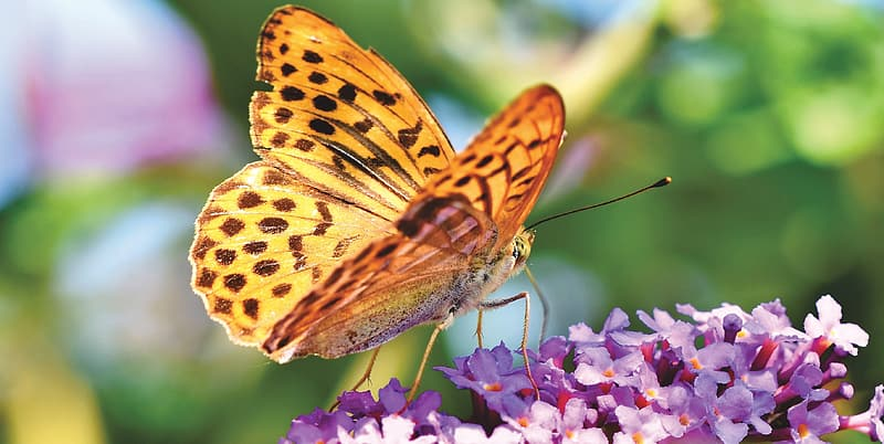 Brown and black butterfly on purple flower during daytime