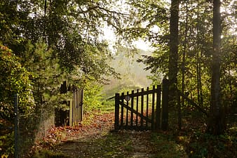 Brown wooden fence near green trees during daytime