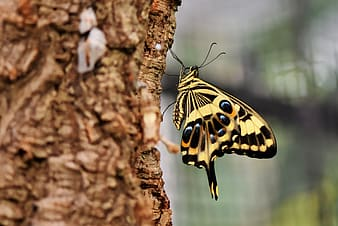 Yellow and black butterfly on brown tree branch