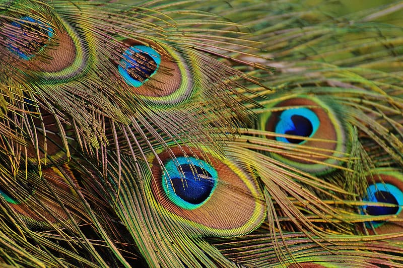 Shallow focus photography of peacock feather