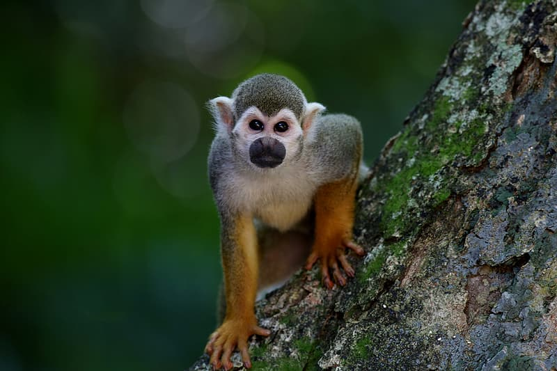 Brown and gray monkey on wooden branch