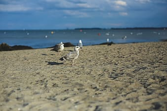 Seagulls standing on sand at beach during daytime
