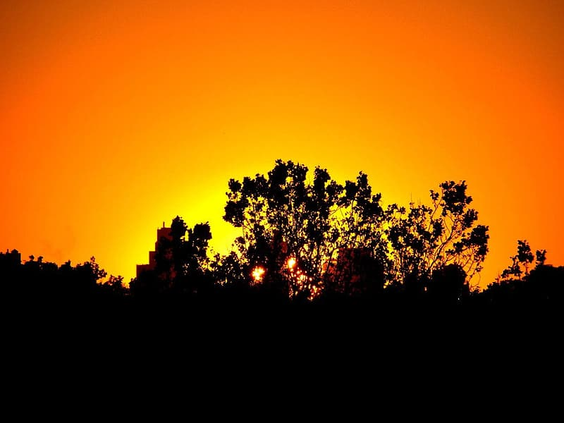 Silhouette of trees during orange sunset
