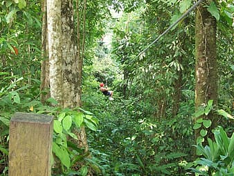 Man riding zip line covered with green leaf trees