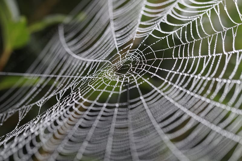 Selective focus photography of water droplets on spider web