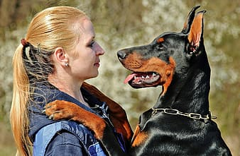 Woman in brown shirt holding black and tan doberman pinscher