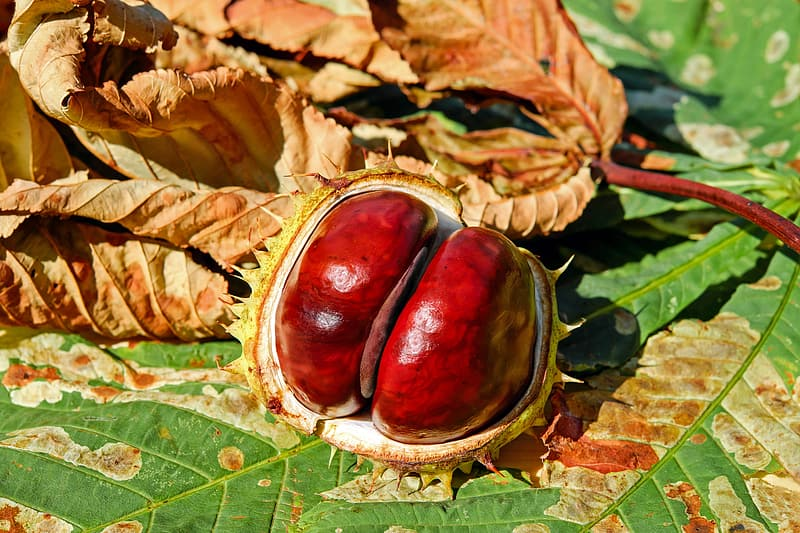 Opened red and green fruit on green leaf
