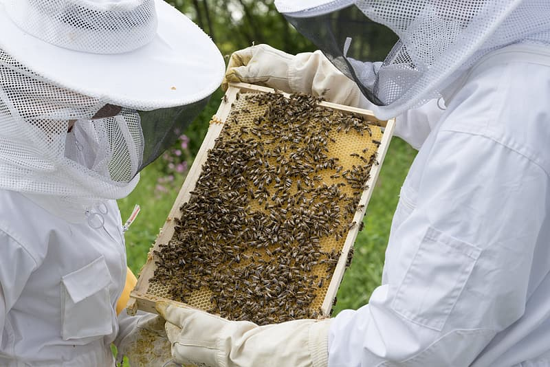 Person holding beehives during daytime
