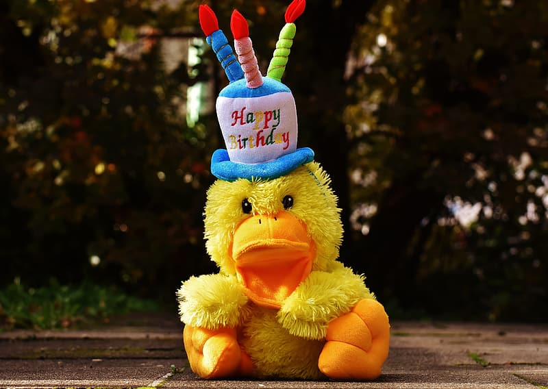 Duckling with happy birthday hat plush toy during day